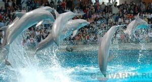 Варненский дельфинарий