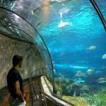 Варненский аквариум